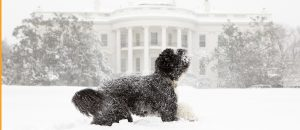 dog at whitehouse